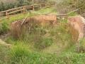 Sentiero_0028